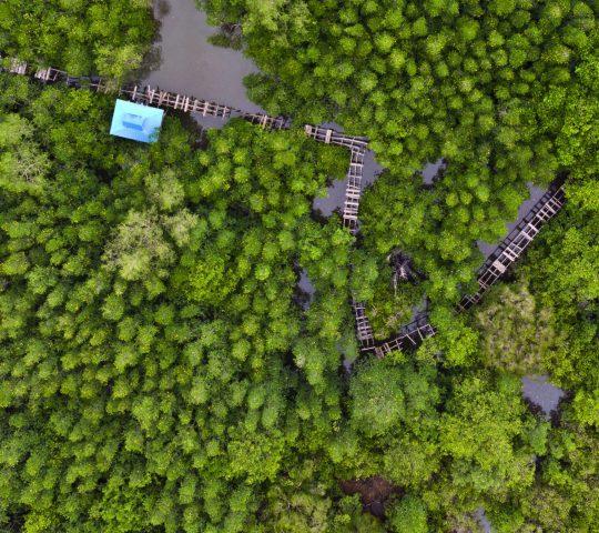 Mangrove Forest Snake River ( Hutan Mangrove Sungai Ular )